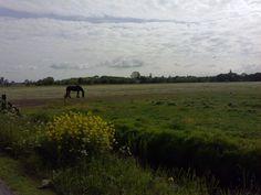 Broek Zuid (de Friese Meren)