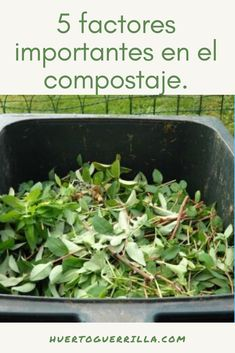 Compost, Green Beans, Vegetables, Save Our Earth, Couple Things, Orchards, Factors, Irrigation, Harvest