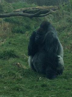 Dublin zoo Dublin Zoo, Beautiful Places, Animals, Animales, Animaux, Animal, Animais