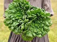 7 Shade Loving Vegetables - Plant Instructions Vegetable Planting Guide, Home Vegetable Garden, Planting Vegetables, Growing Vegetables, Veggies, Growing Spinach, Growing Carrots, Growing Greens, Kale