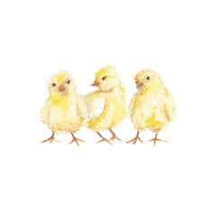 Baby Chicks by Carrie Beth Taylor for Minted