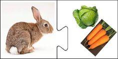 ¿Qué comen los animales? | Mírame y aprenderás