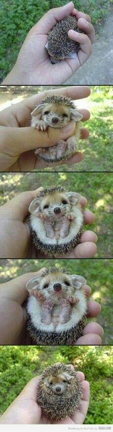 ik ben een cute egel!!!