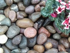 These are Egg size & multi-coloured. Decorative Gravel, Flower Beds, Blueberry, Egg, Ornament, Landscape, Fruit, Natural, Water