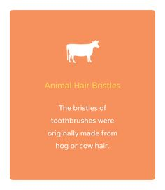 When you think about brushing your teeth, cow and pig hair probably doesn't come to mind. The first tooth brushes made use of their hair. Who knew? Dental Fun Facts, Wtf Fun Facts, Strange Facts, Random Facts, Radiology Humor, Dental Humor, Pharmacy Humor, Dental Hygiene, Nursing Memes