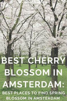 Amsterdam Travel: Where to Find Cherry Blossom in Amsterdam : As the Bird flies... Travel, Writing, and Other Journeys Cherry Blossom Season, Cherry Blossom Tree, Blossom Trees, Amsterdam Travel Guide, Visit Amsterdam, Start Of Winter, Van Gogh Museum, Magnolia Trees