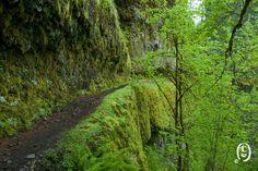 Eagle Creek, Portland hiking