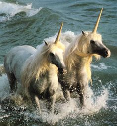 Image detail for -Unicorns of the sea, for example, feed almost exclusivelyon kelp ...