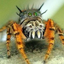 Freakiest Spiders On Earth