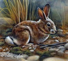 Little Rabbit – Paintings of Wildlife & Nature by Rebecca Latham Wildlife Paintings, Wildlife Art, Animal Paintings, Paintings Of Nature, Rabbit Drawing, Rabbit Art, Animals And Pets, Cute Animals, Bunny Painting