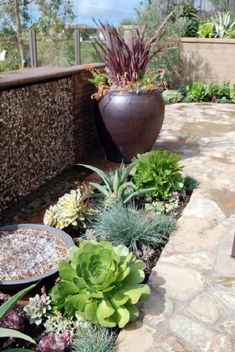 Easy Desert Landscaping Tips That Will Help You Design A Beautiful Yard Succulent Landscaping, Modern Landscaping, Landscaping Plants, Front Yard Landscaping, Succulents Garden, Landscaping Ideas, Succulent Plants, Desert Backyard, Backyard Patio