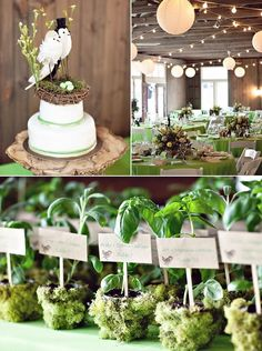 Love the favors!  covering small clay pots from the dollar store in moss and planting an herb in each one
