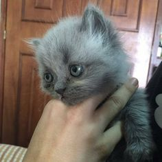 Oh my goodness what an adorable kitten. It looks like it's sad though
