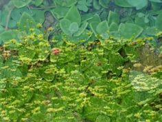Ένας ευαίσθητος Απρίλης - Παντελής Θαλασσινός Spring Activities, Plants, Youtube, Flora, Plant, Planting, Youtube Movies