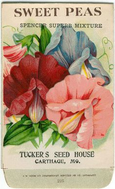 Vintage Seed Packets | Vintage Flower Seed Packet Tuckers Seed House Lithograph SWEET PEAS ...