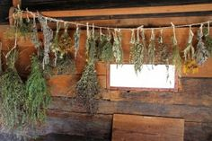 Come see the basics of preserving herbs. 6 Ways to Preserve Herbs. Homegrown herbs are 3 to 4 times stronger than store bought herbs! Organic Herbs, Organic Gardening, Natural Herbs, Herbal Remedies, Home Remedies, Dry Garden, Queen Annes Lace, Garden Living, Drying Herbs