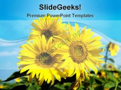 Sunflowers Family Nature PowerPoint Templates And PowerPoint Backgrounds 0211 #PowerPoint #Templates #Themes #Background