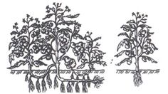 Metodele Maslov sau cum să creștem de zece ori producția de roșii Summer House Garden, Home And Garden, Gardening Tips, Green, Art, Zoom Zoom, Garden Ideas, Vineyard, Technology