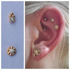 Two fresh scapha piercings using 18kt gold Ipsa and Sabrina ends from Anatometal