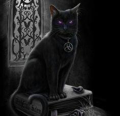 Wicca, Voodoo Rituals, Creepy Cat, Magic Cat, Cat Background, Witch Cat, Voodoo Dolls, Beautiful Cats, Cute Animals