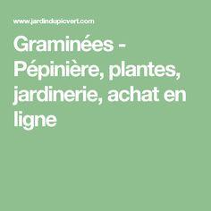 Graminées - Pépinière, plantes, jardinerie, achat en ligne