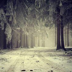 equinox (or snow on cedar trees) by r3novatio.