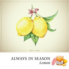 Zest up your kitchen with Bonne Maman's tasty Lemon Curd, the perfect amount of sweet and tart. Try Something New, Lemon Curd, Cake Plates, Preserves, Jelly, Tea Party, Tart, Pineapple, Favorite Recipes