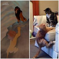 sixpenceee: The Lion King live-action movie is out early By I Love Disney Funny Cute Cats, Cute Cat Gif, Fun Funny, Live Action, Funny Animal Pictures, Cute Pictures, Long Pictures, Cute Cat Wallpaper, Iphone Wallpaper