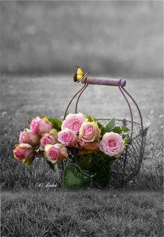 Resultado de imagen para jardin de flores rosas