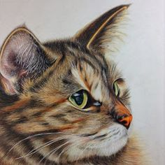 """COLORED PENCIL Magazine - Contests & Giveaways!: February CPM Art Challenge """"Portrait of a Cat"""" #1402"""