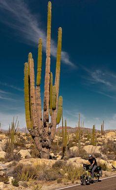 Ultimate Adventure Bucket List 2011 -- National Geographic Adventure. Bike the Baja Peninsula, Mexico