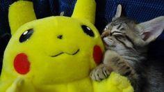 Cat likes stuffed