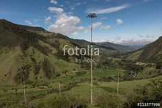The Valle de Cocora in Colombia