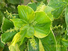 Shades of green Blog: authorbryanblake.blogspot.com