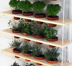 Buying fresh herbs at the grocery store can get expensive. You get a small amount for $2-$4 and the quality usually isn't that great. You can save a lot of money by having your own DIY herb garden. Herbs are easy to take care of and don't require much space. The seedlings, potting soil and pots are very inexpensive too. Also, …