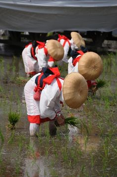 Watch the Onda rice planting shrine ritual of Sumiyoshi shrine in Osaka, Japan 住吉大社の御田植神事