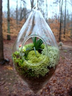 Hanging TeardropTerrarium Glass Mondo Grass by MossTerrariums, $31.00