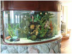 PageCustom Aquariums and Fish Keeping