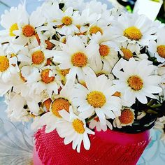 Gel usulca yat yanıma bahar geliyor sevdiğim…  Yeni çiçekler açmalı sarıldığımda teninde,  Suyu ben, çiçeği sen, toprağı biz sevdiğim…