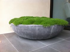 Ben Scott - Garden Design - Spring Rd You are in the right place about garden pot design Here we off Australian Native Garden, Australian Plants, Australian Garden Design, Moss Garden, Garden Planters, Big Planters, Big Garden, Design Jardin, Native Plants