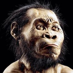 The largest assemblage of fossil relatives ever discovered in the history of South Africa has been found at the Cradle of Humankind.The fossils were uncovered in a deep cave near the world renowned...