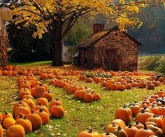 Pumpkins, Golden Leaves...I LOVE FALL...and THE PUMPKIN PATCH....and THE CORN MAZES!