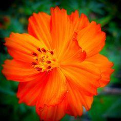 Flourish Photography