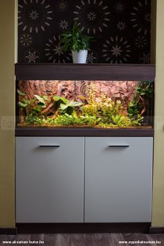 Fresh water community tank. 200 liter