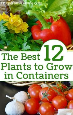 Gardening Vegetables You can grow vegetables in pots in your own container garden even if you are a beginner gardener. You can start with these 12 easy to grow vegetables so you can enjoy fresh vegetables from your own container garden all summer long.