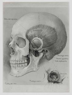 Max Brödel, the celebrated professional medical illustrator. | Harvey Cushing: A Journey Through His Life