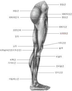 서울인체조형학원 - 인체해부드로잉 Zbrush Anatomy, Eye Anatomy, Human Body Anatomy, Anatomy Poses, Muscle Anatomy, Anatomy Study, Anatomy Art, Body Sketches, Anatomy Sketches
