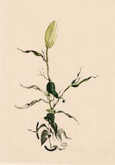 Evie Cahir | plant study