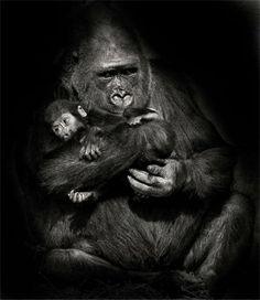 21 maravillosas imágenes que muestran el amor animal - Vida Lúcida