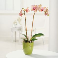 I have an orchid on my kitchen table and I think it spruces up the whole room! they are so beautiful